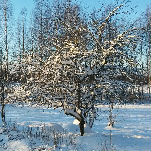 Snow makes everything so pretty! #Suomi #Finland
