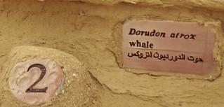 Wadi2-24