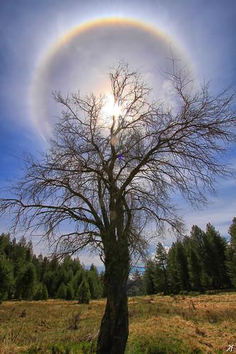 sea sun tree beach pine 22 halo parhelion baum degree nigra livadi pinus sonnen epirus suntree παραλία φύση σύννεφα πεύκα pades konitsa πεύκο ipiros δέντρο aoos εξοχή smolikas ήλιοσ ήπειροσ όροσ ακτίνεσ πίνδοσ λάκκα τύμφη κόνιτσα πάδεσ βελανιδιά παρήλιο σμόλικασ palioseli παλιοσέλι αώοσ άλωσ οξιά λάκκααώου παλιοσέλλι palioselli περιήλιο λξ padhes ηλιόδεντρο