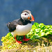 Puffin on the edge of the cliff, Látrabjarg by Andrey Sulitskiy