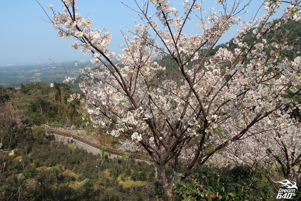 2015楓樹湖木蓮花17