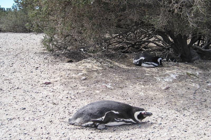 Patagonia 223.jpg