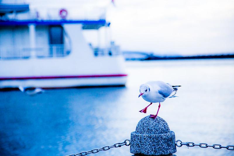 滋賀県・琵琶湖・湖畔ハイキング_56