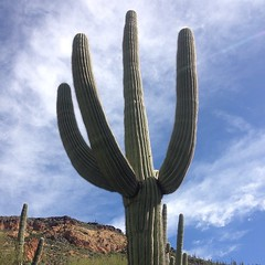 That is a good looking cactus.