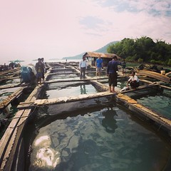 We have been checking out various offshore collection cages for live mud #grouper caught for ranching and breeding in the Myeik archipelago, in #Myanmars Tanintharyi region. The aim of this fieldwork is to map out the current structure of #fisheries in t