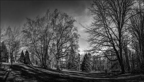 park trees bw panorama canada bc britishcolumbia pano lawn surrey lightroom photoshopelements redwoodpark martinsmith southsurrey nikond7000 6shotpano topazbweffects ©martinsmith nikkor1855mmf3556gvrii