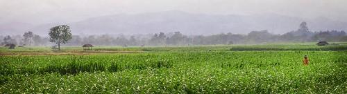 landscape thailand scenery thai 2015 ประเทศไทย ไทย เมืองไทย