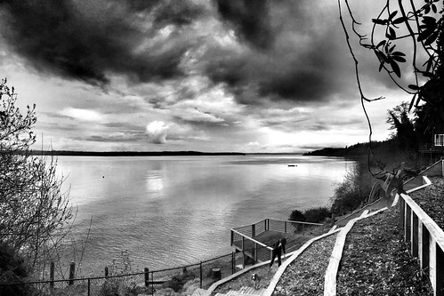 bw monochrome vashonisland iphone project365 53365 iphoneography snapseed