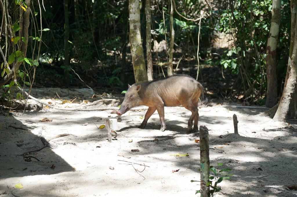 gaya island resort sabah malaysia - review - Rebecca Saw-018