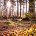 Warsteiner_Wald_Gegenlicht_2 by RockingB