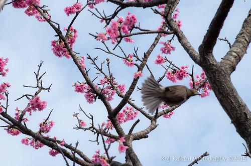 与儀公園 | Naha City, Okinawa 13