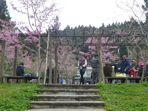 Ta-Alishan-Parc-Marche (107)
