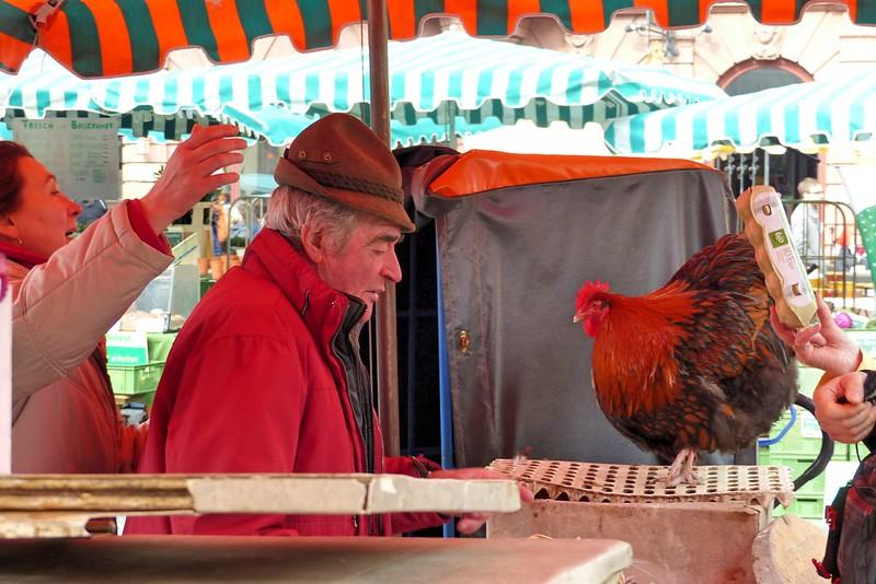 Mainzer Hahn auf dem Mainzer Wochenmarkt