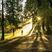 Light by Nejdet Duzen