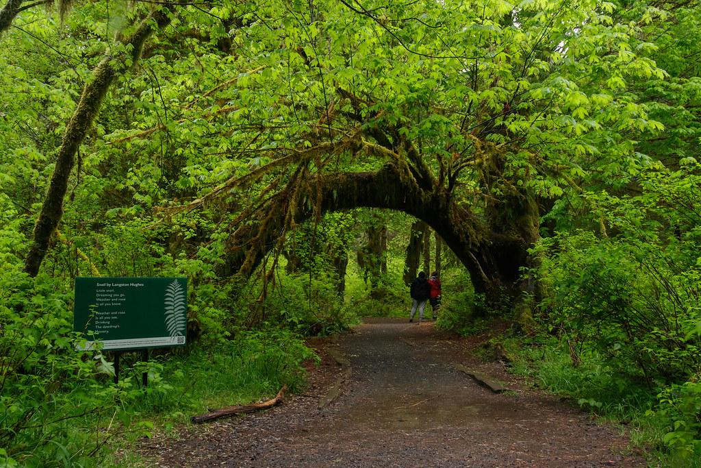 Poet Tree (Rain Forest Edition)