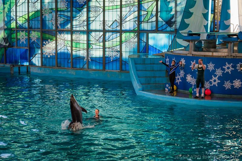 Dolphin Christmas Show Sea World
