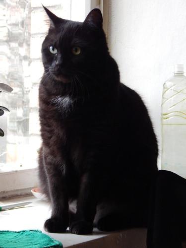 Кот Муся сидит на подоконнике