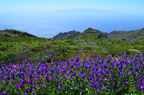 Teno Park, La Gomera, Tenerife