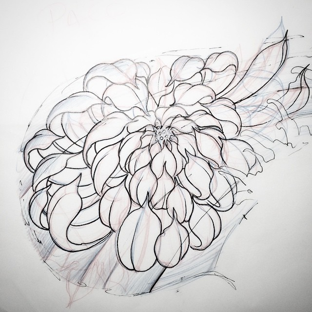 Image Gallery japanese chrysanthemum drawing