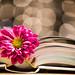 bookmark by le cabri