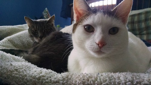Blizzara and Bubbles kitty, hanging out.