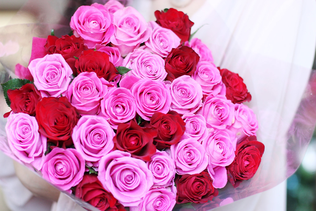 Most beautiful pink roses in the world for Foto beautiful