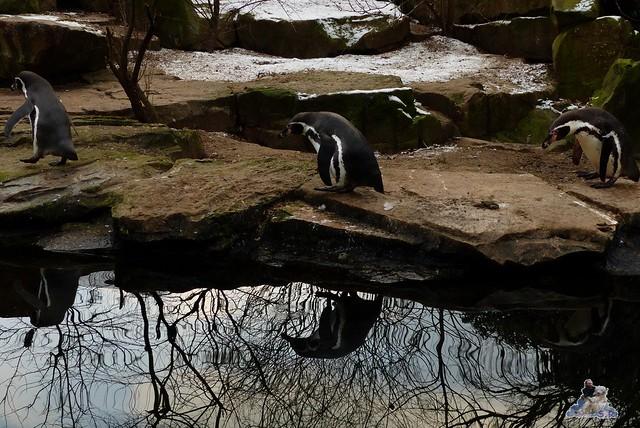 Zoo Berlin 06.02.2015  54