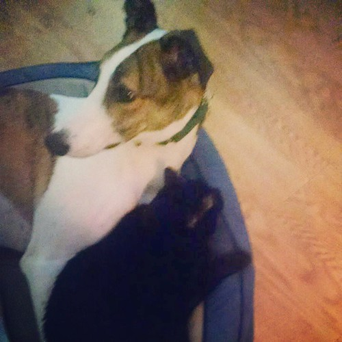 The dee-oh-gee and his kitteh friend! #Cane #Julio #DogsOfInstagram #CatsOfInstagram