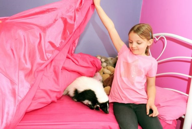 una nena con un zorrillo como mascota