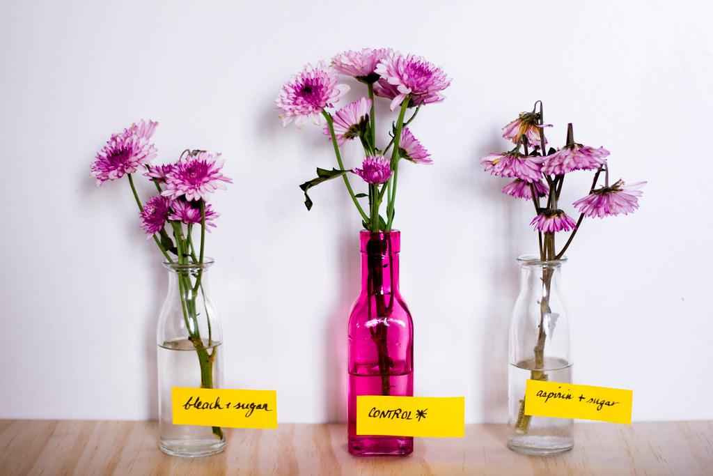 FlowerExperiment-Day3-IMG_2720