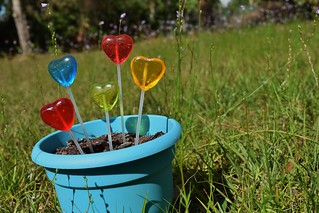 From Seeds to Lollipops