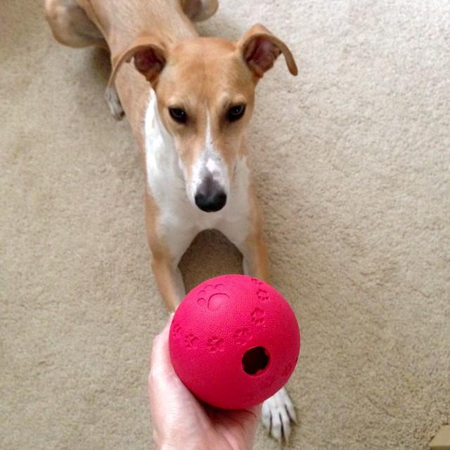 Trixie Dog Activity Snack Ball