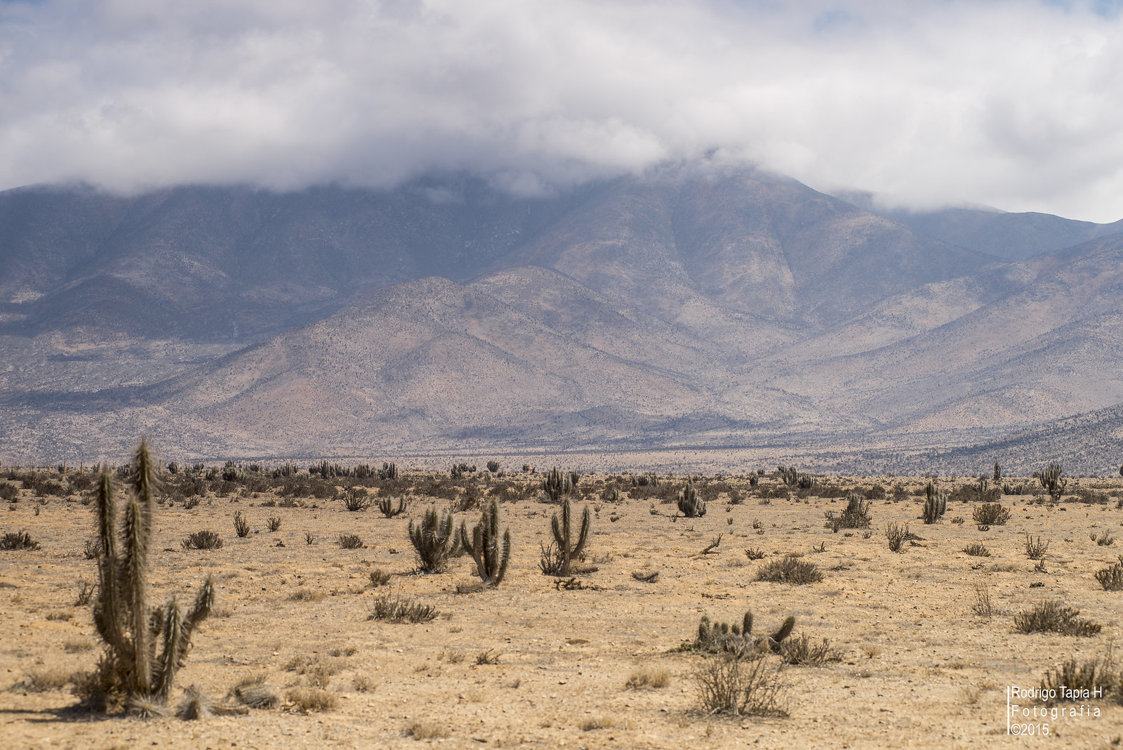 Desierto Costero del Huasco