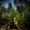 Frage: Warum steht ein Pils im Wald? by TobiBook