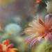 cacti by Reg Ramai