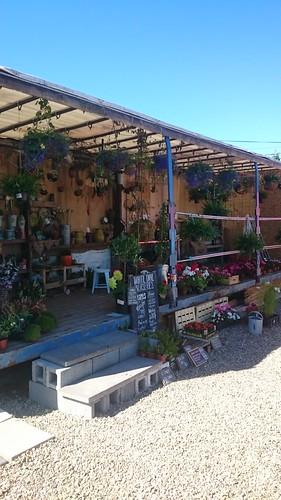 our little shop,  Newcastle west