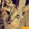 Cat #prisma #art #cat