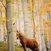Balkan woodland by .:: Maya ::.