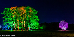 Westonbirt Illuminations