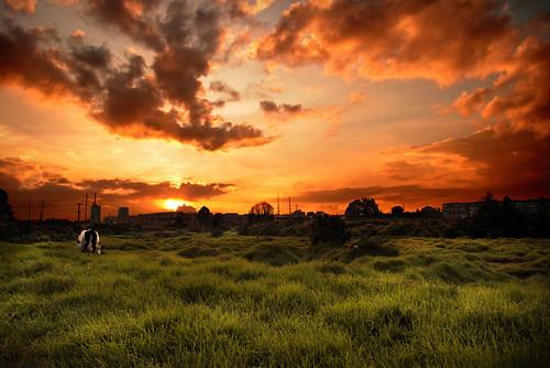 sunset sky orange green luz sol clouds cow colombia bogota farm cielo nubes campo ligth naranja tarde vacas granja rayos sabana afueras atardece