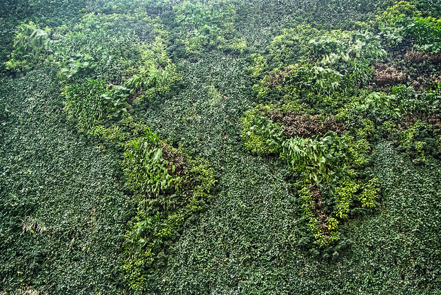 green wall map