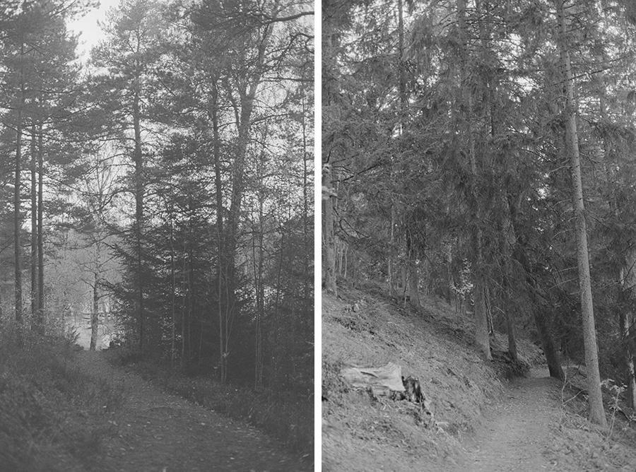 analogt-h14-15-skog