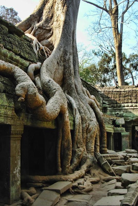 Angkor Wat's Ta Phrom