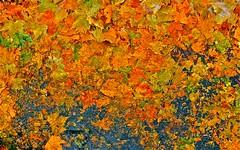 Dead Leaves c
