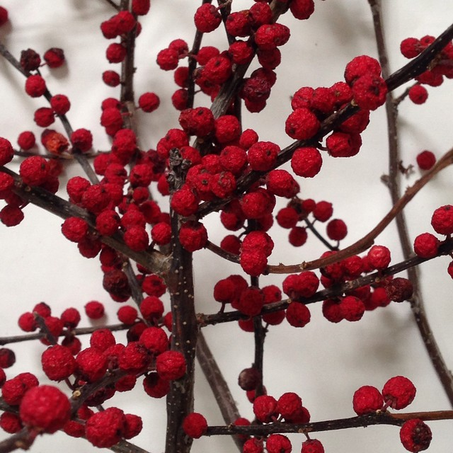 Winter berries.