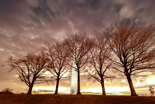 Washington Monument Trees