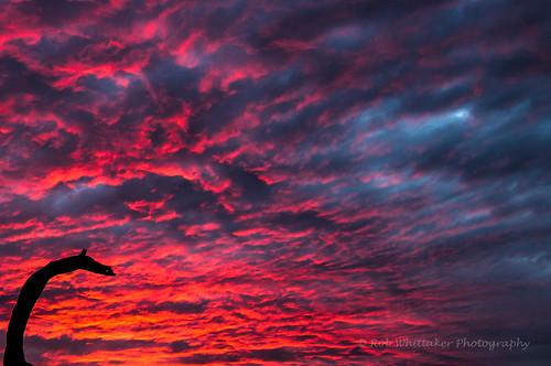 africa sunset sun abstract canon dragon creative surreal westafrica namibia angola sossusvlei southernafrica deadvlei namibdesert dragonshead canonphotography hardap namibnaukluftnationalpark africaportrait robertwhittaker namibiaoverland africaphotography sossusvleipan swafrica abstractafrica erongonamibia sazzoo robwhittaker robwhittakerphotography sazzoocom robertwhittakerphotography namibiadesrt oasisafrica ©robwhittakerphotography dragonsneck nambiaphotography