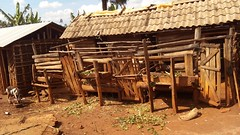 Timber build house roofed with asbestos for dairy goats at Babati, Tanzania.