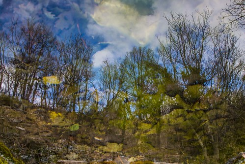 experimental nature reflections