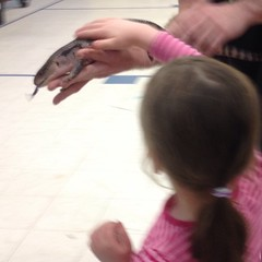 Teagan and the blue-tongued #skink. #bravegirl